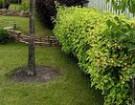 Какие кусты для живой изгороди подходят?